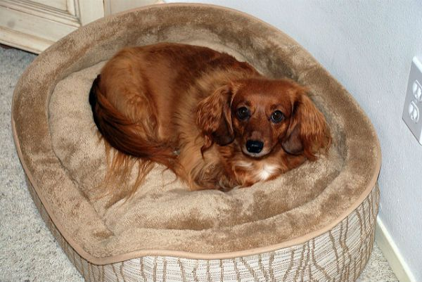 Dog on pet bed