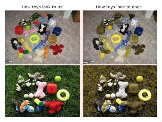 Dog color blind