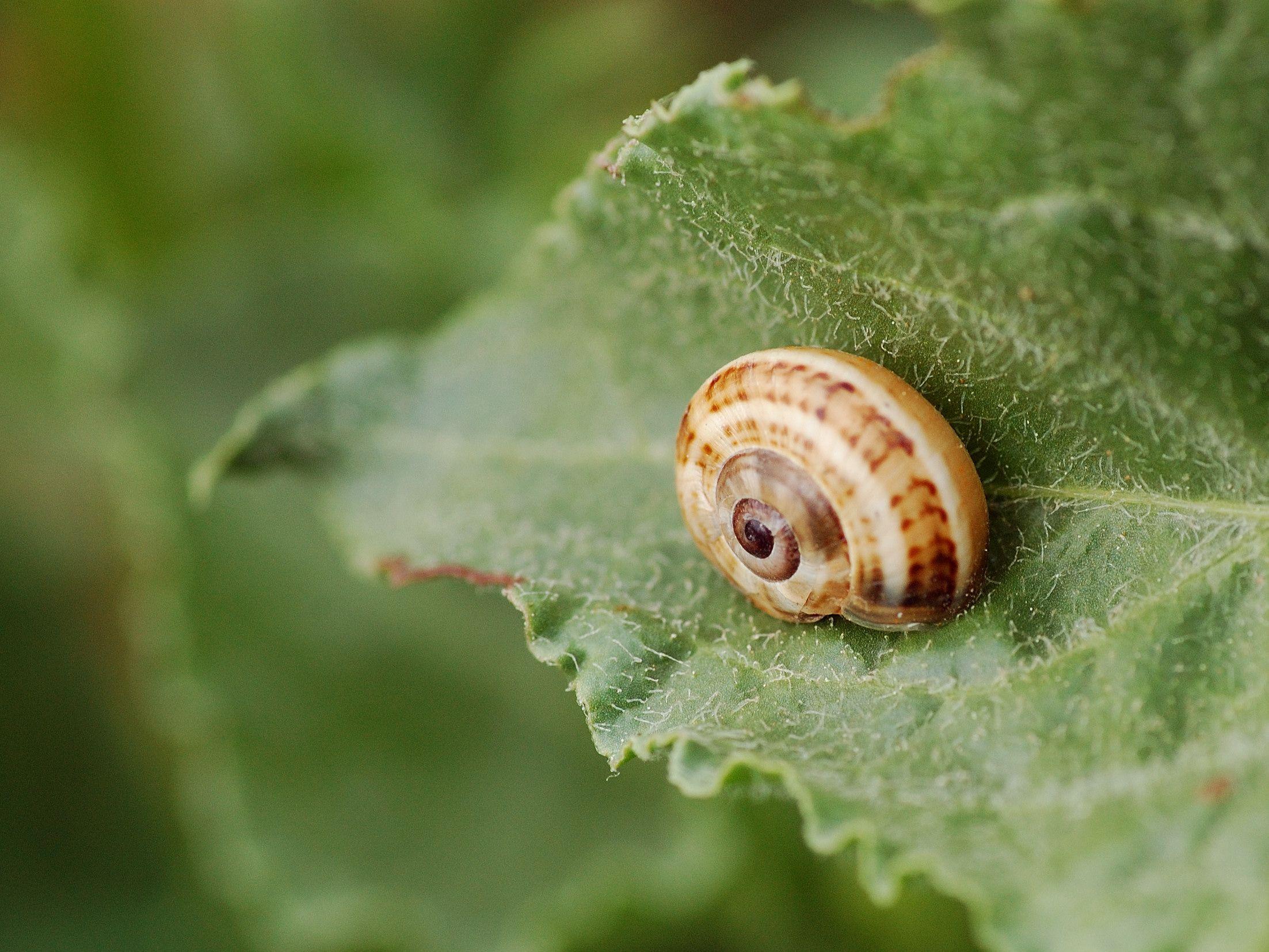 A sleeping snail