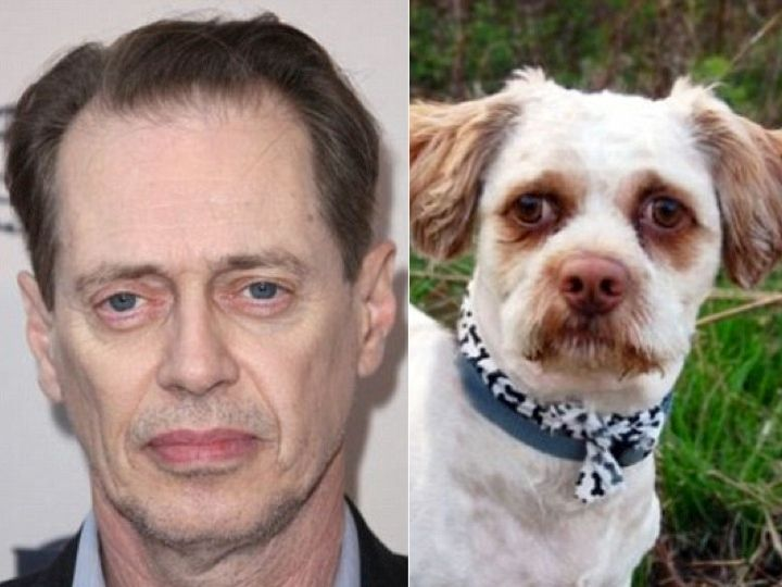 Steve Buscemi and a dog