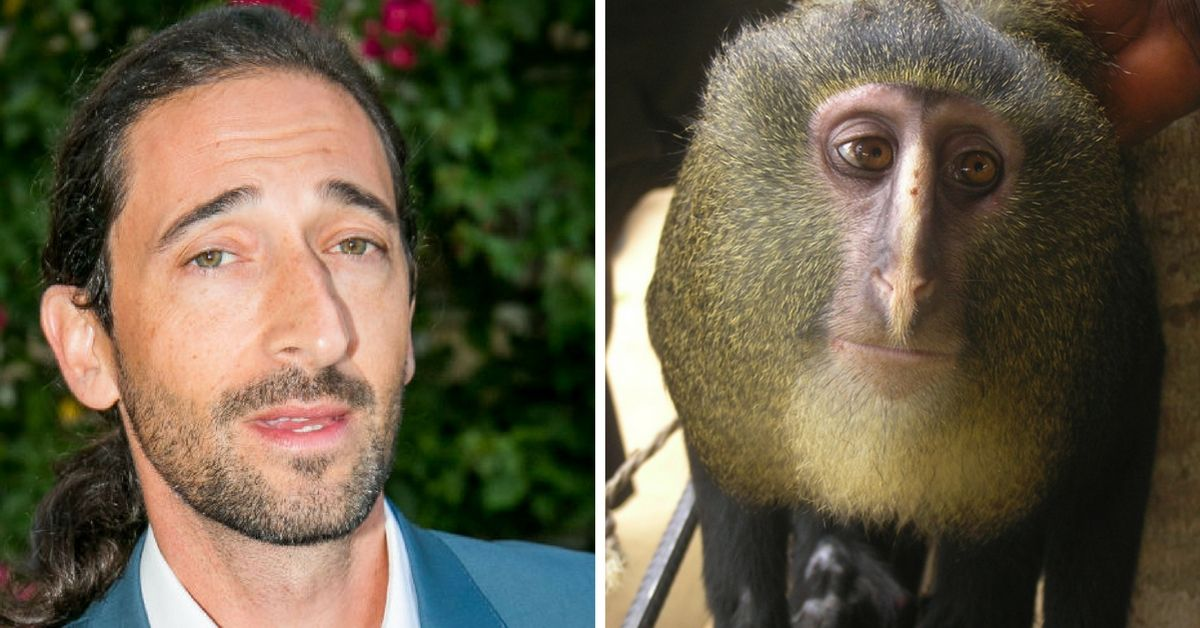 Adrien Brody and a lesula monkey