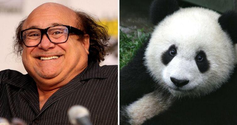 Danny DeVito and a panda