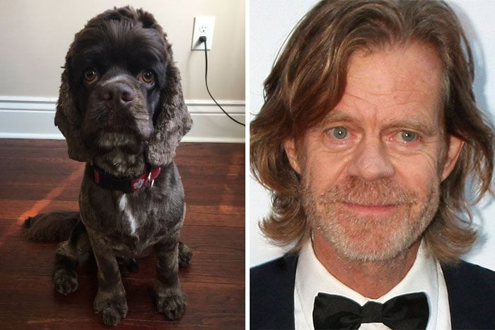William H. Macy and a dog