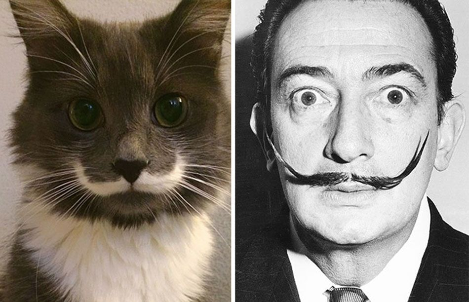 Salvador Dali and Hamilton the Hipster Cat