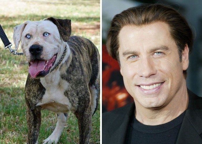 John Travolta and a pit bull