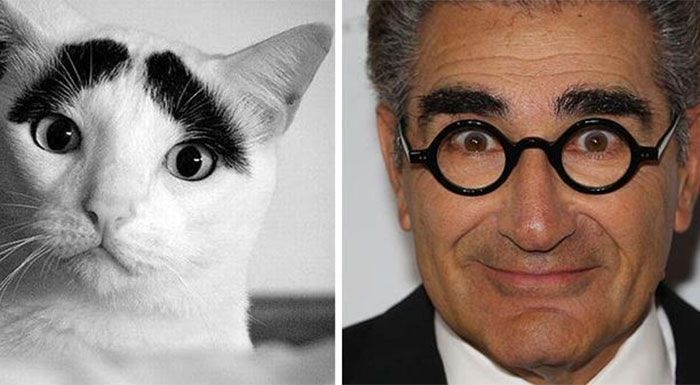 Eugene Levy and a cat