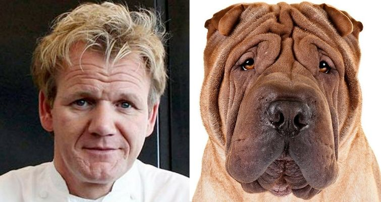 Gordon Ramsay and a shar pei