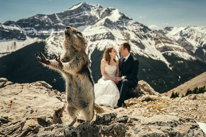 Squirrel in front of a bride and groom
