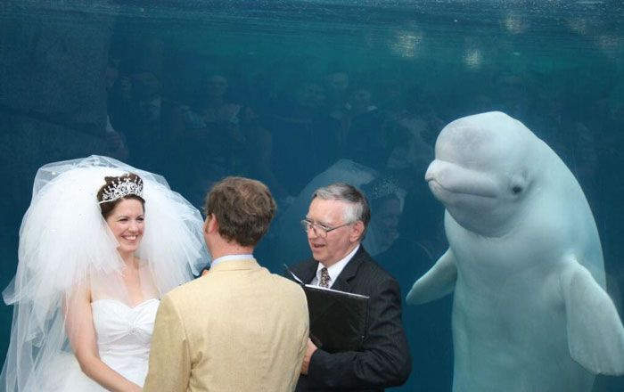 A dolphin watching a wedding