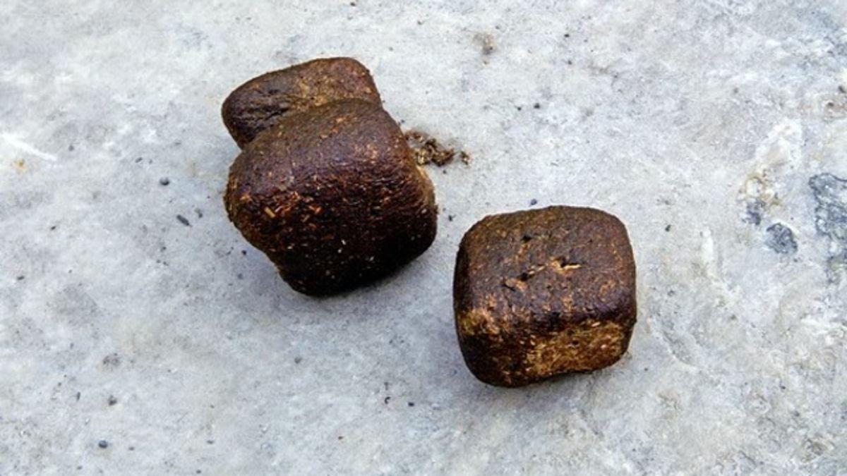 Pieces of wombat poop