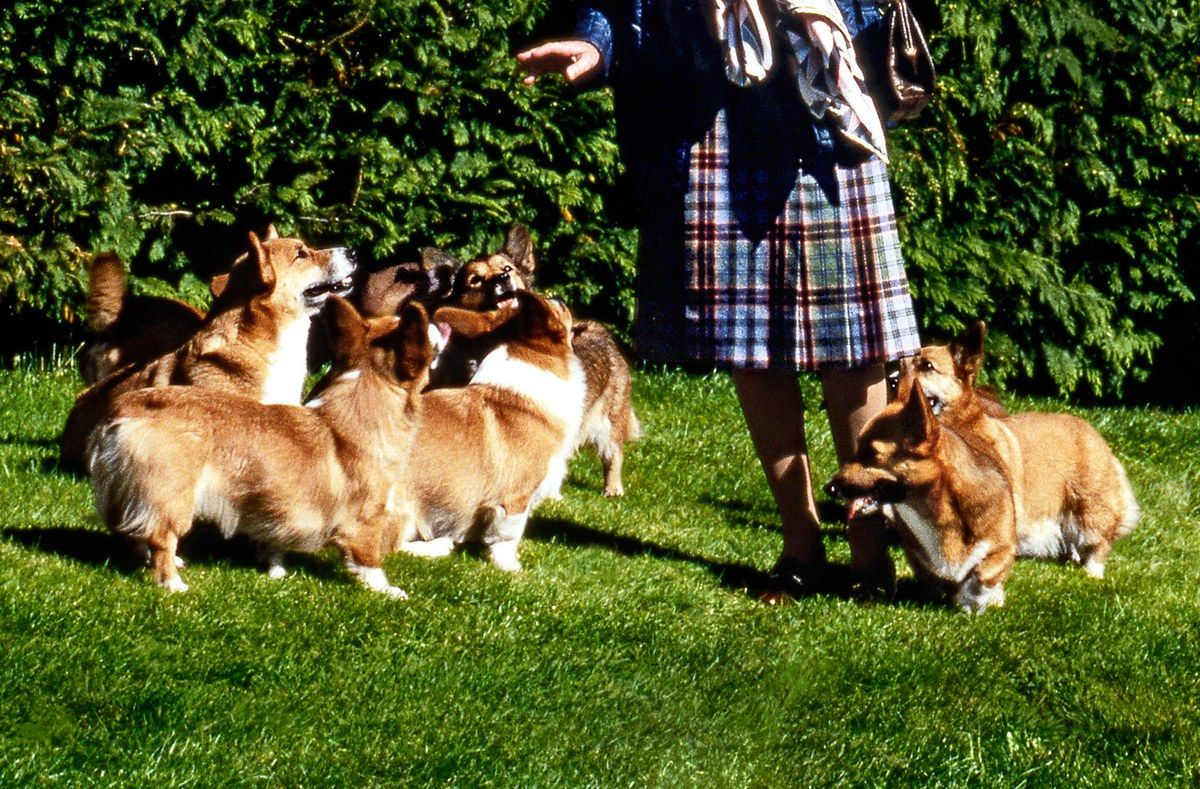 The Queen surrounded by her corgis