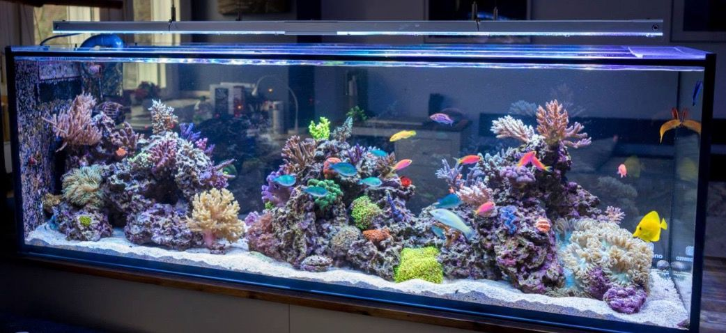 Family Sends Warning After Fish Tank Releases Deadly Toxin