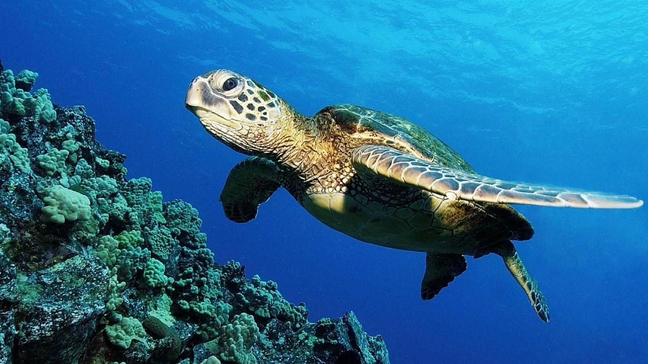 A turtle in the ocean