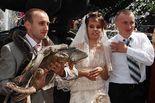 A bride and groom looking at a man with reptiles