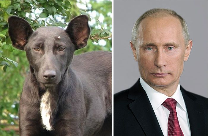 Vladimir Putin and a dog