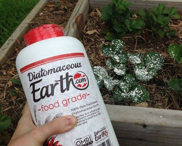 7 natural ways to keep ticks out of your yard this summer - How to use diatomaceous earth in the garden ...