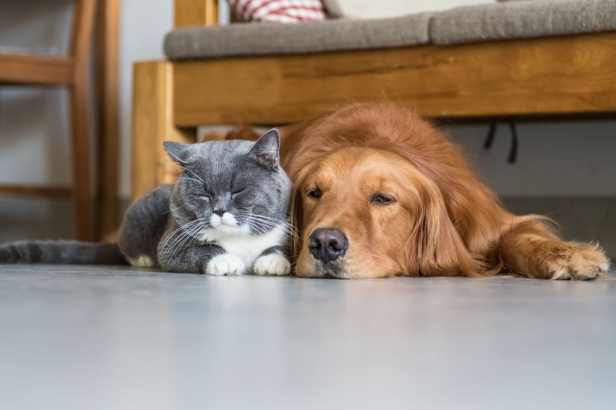 A cat and dog laying down