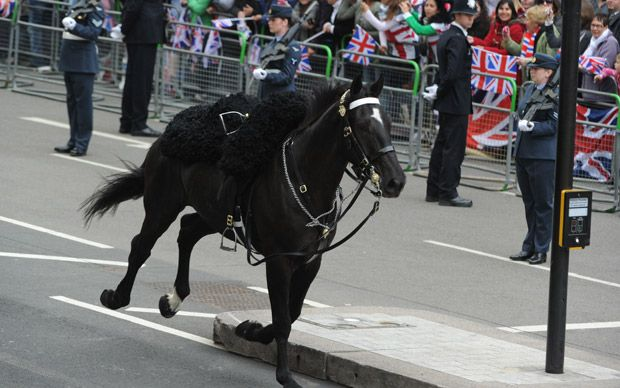 A black horse escaping the parade
