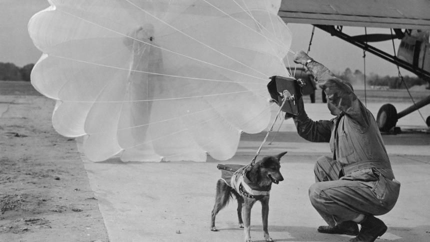 A dog wearing a parachute