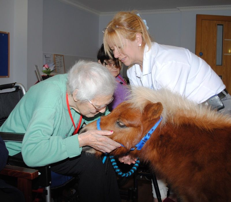 Therapy Ponies Scotland