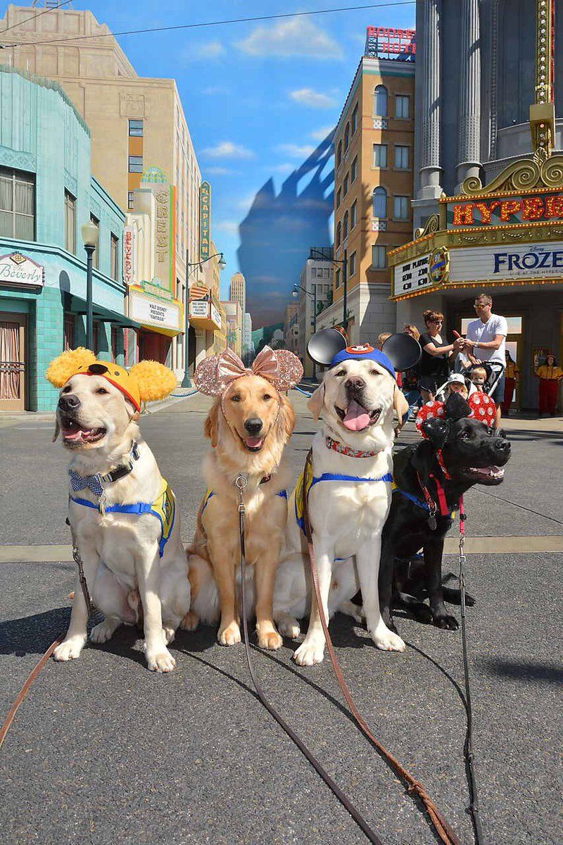Service Dogs at Disneyland