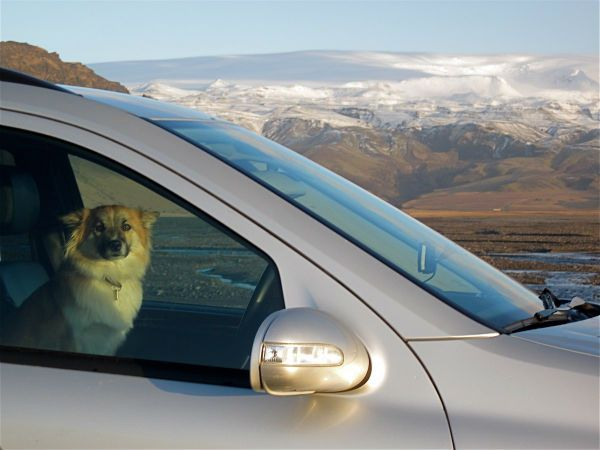 Dog hot car