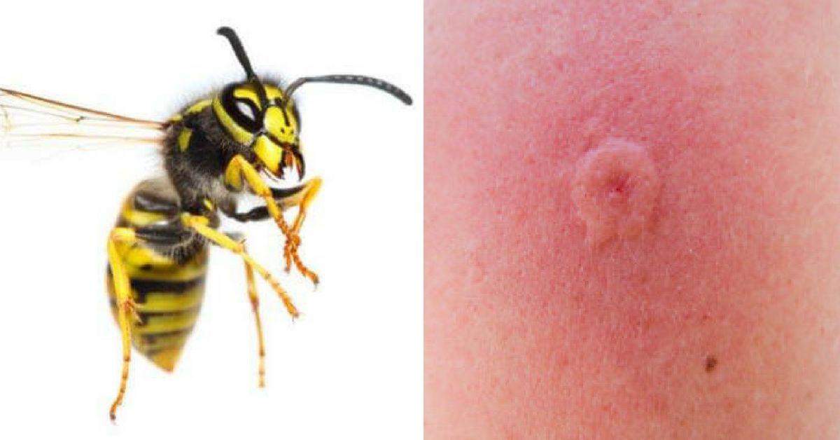 Точно не помню , что было во сне, но хорошо запомнился момент, когда я открылас банку с осами или пчелами и они начали вылетать , но меня не кусали.