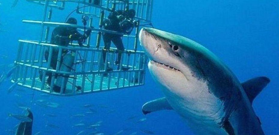 Shaq Shark Week