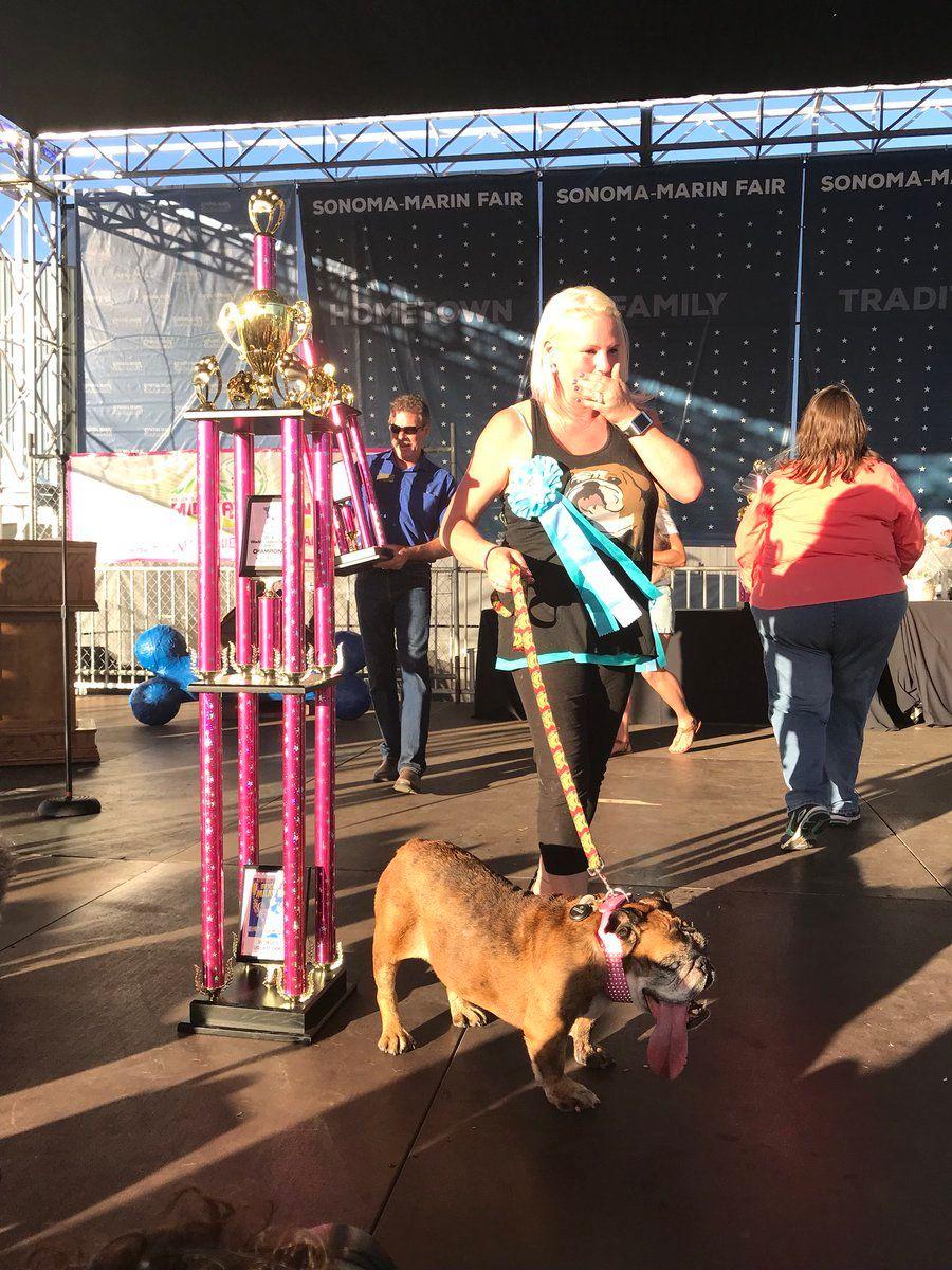 Ugliest Dog Competition Zsa Zsa