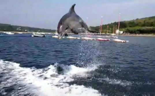 Beach Closes After Sex-Crazed Dolphin Refuses To Leave ...