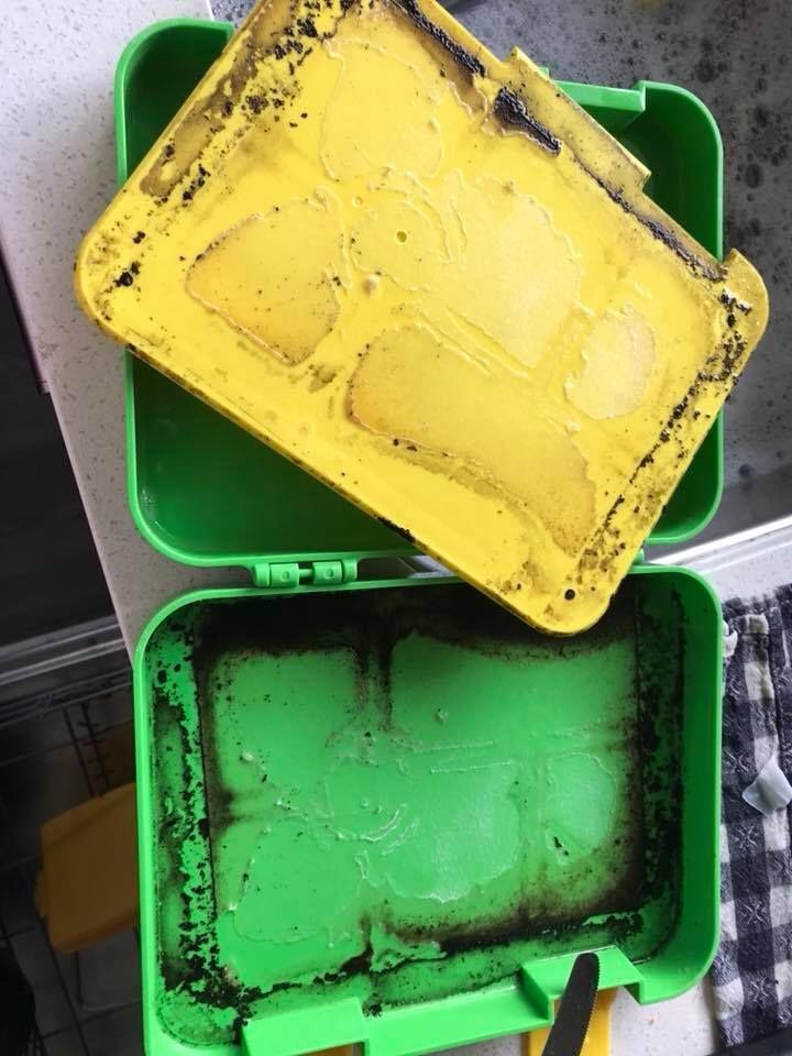 The moldy lunchbox