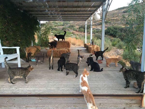 Greece cat sanctuary