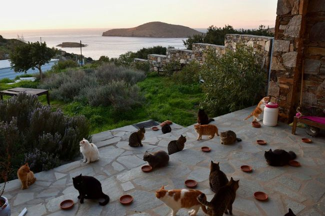 Cat sanctuary Greece.