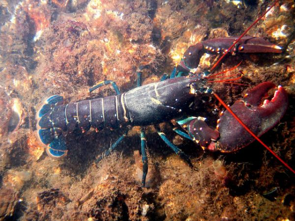 Lobster colors.
