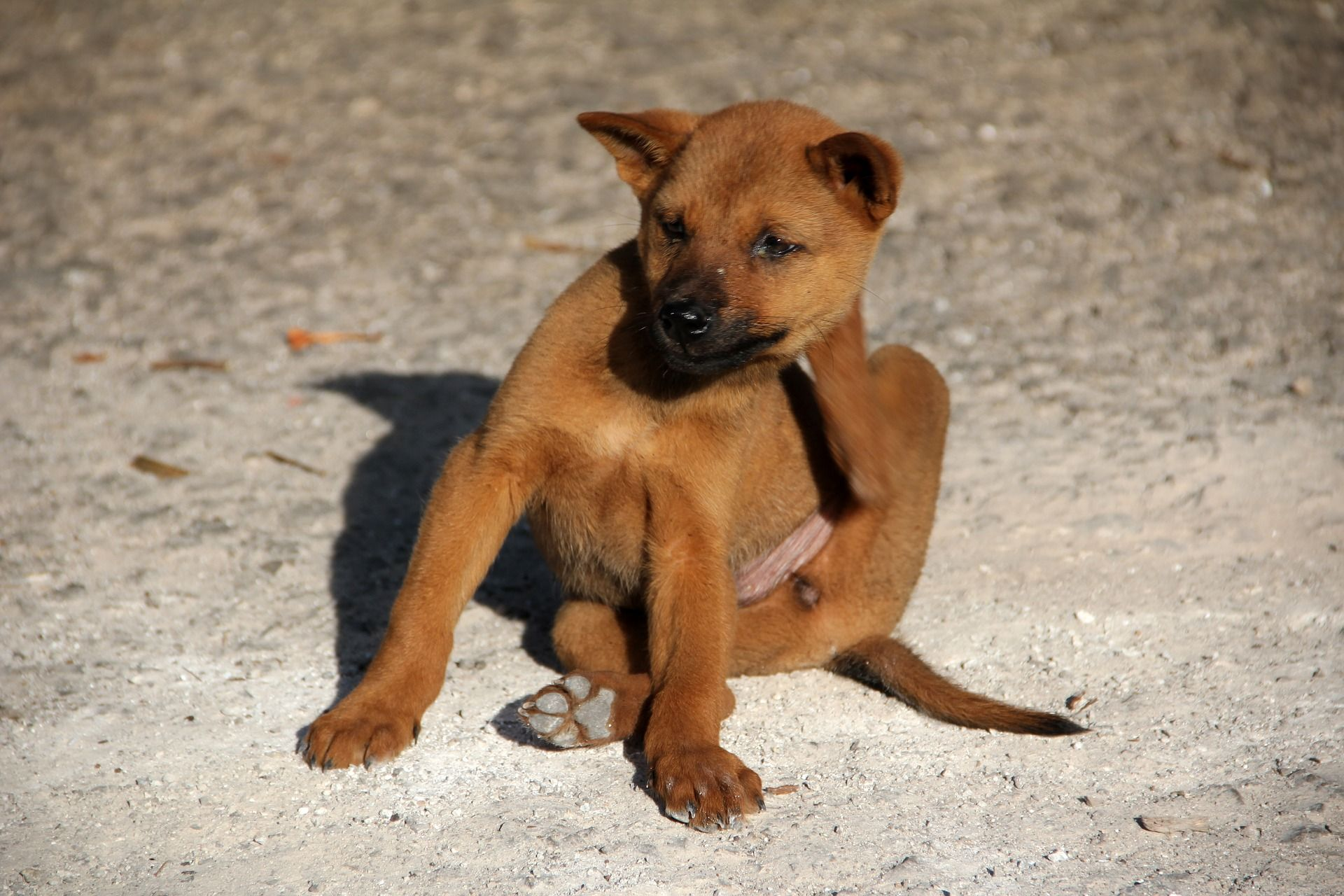 dog-1559746_1920-1.jpg