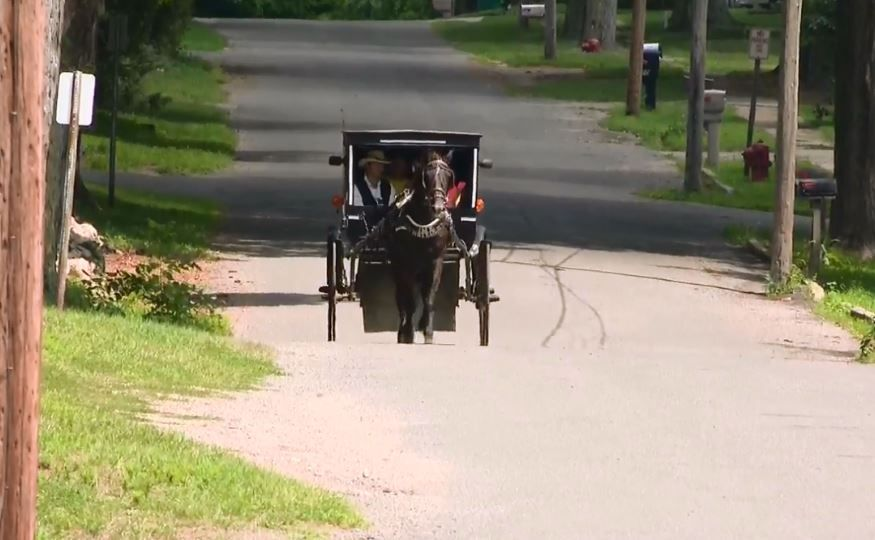 The horse and buggy in action