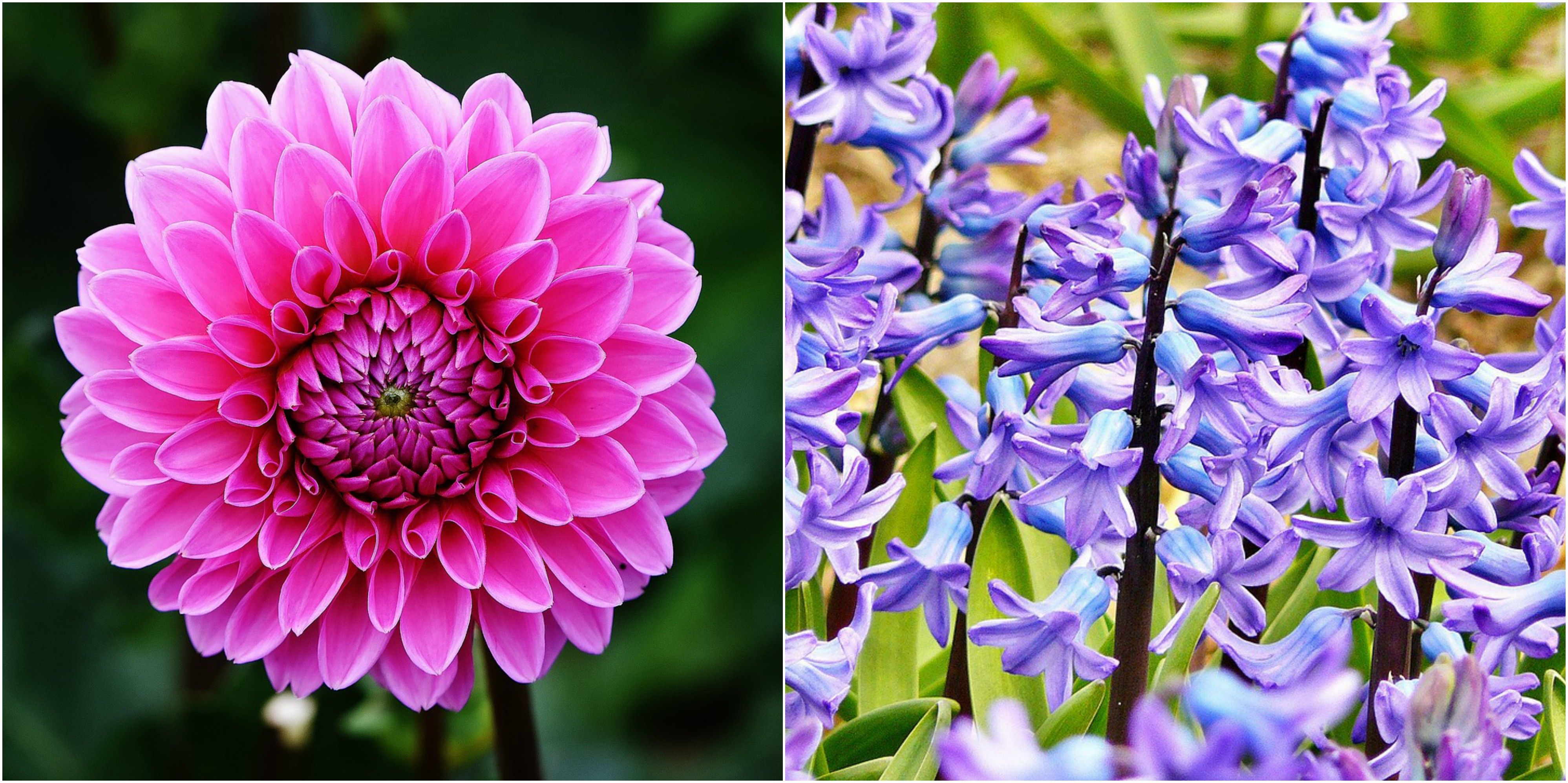 15 Flowers That Have Powerful Spiritual Connections To The