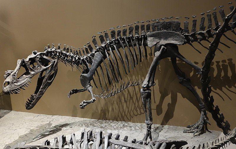 Utah Dinosaur Skeleton