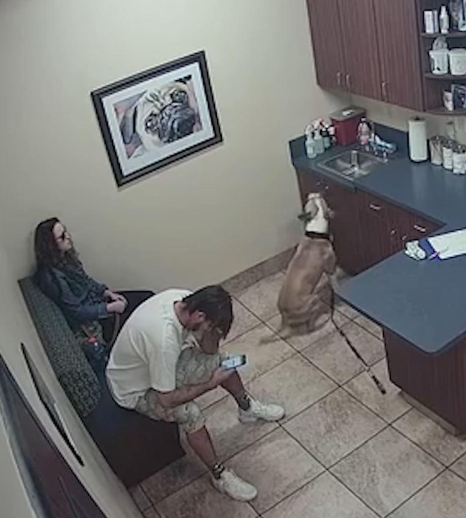 woman escapes attacker