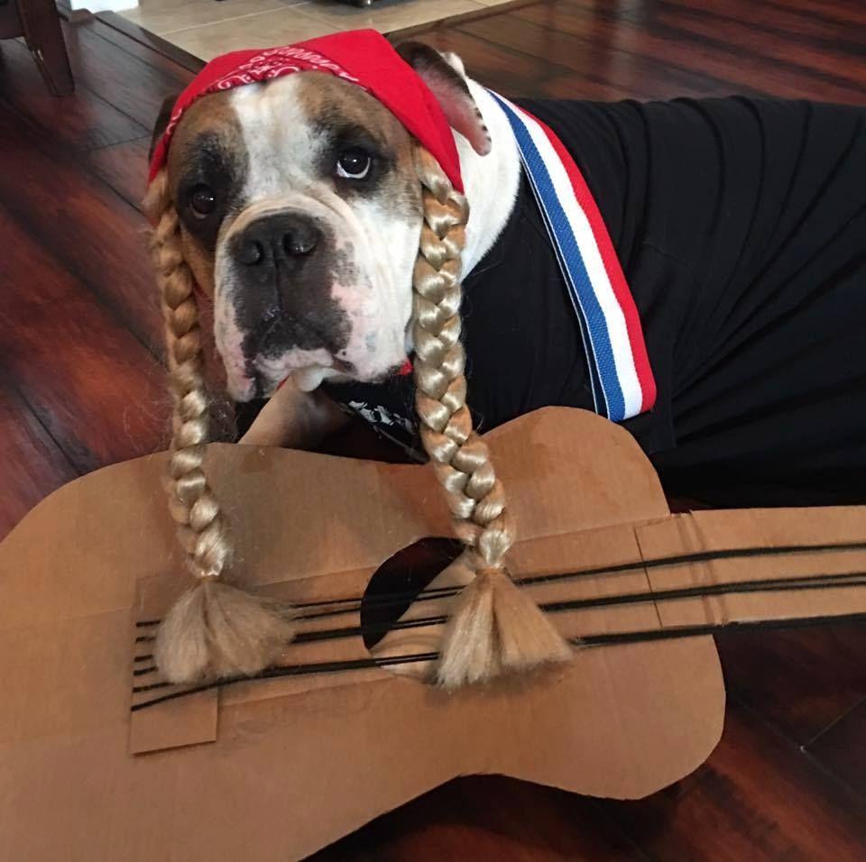 willie nelson dog