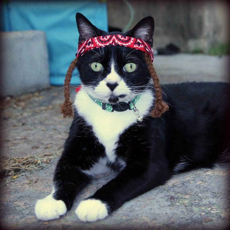 willie nelson cat