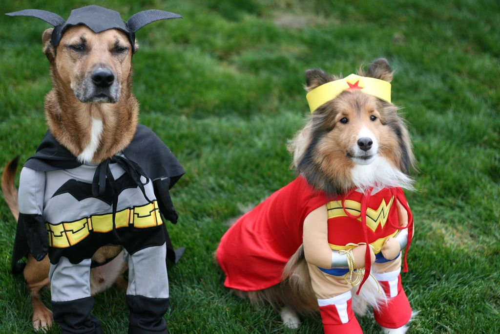 Two dogs dressed up as superheroes