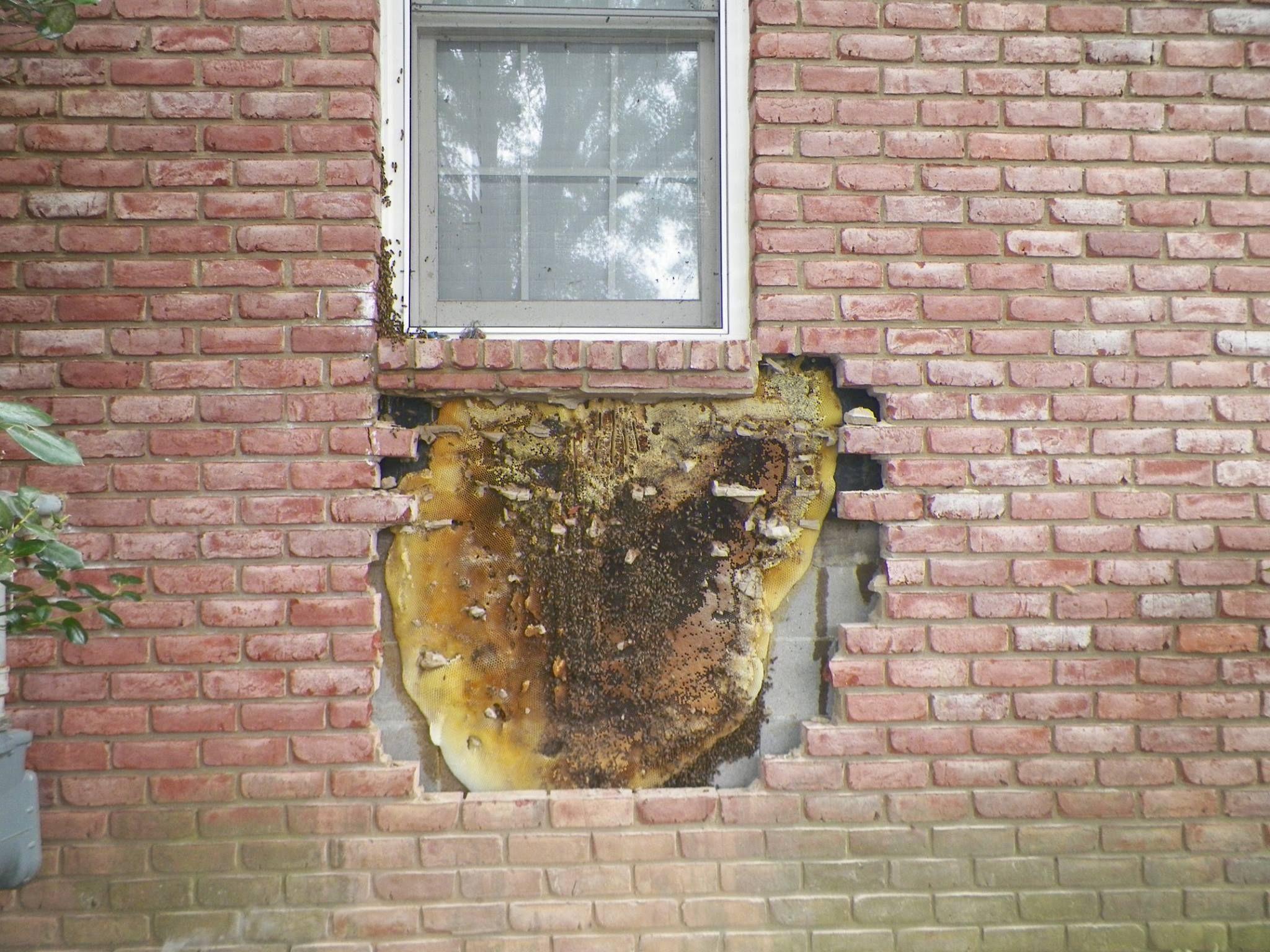 Bee hive in brick wall