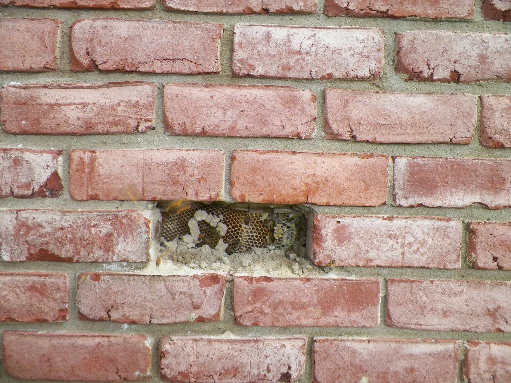 Bee hive behind brick wall