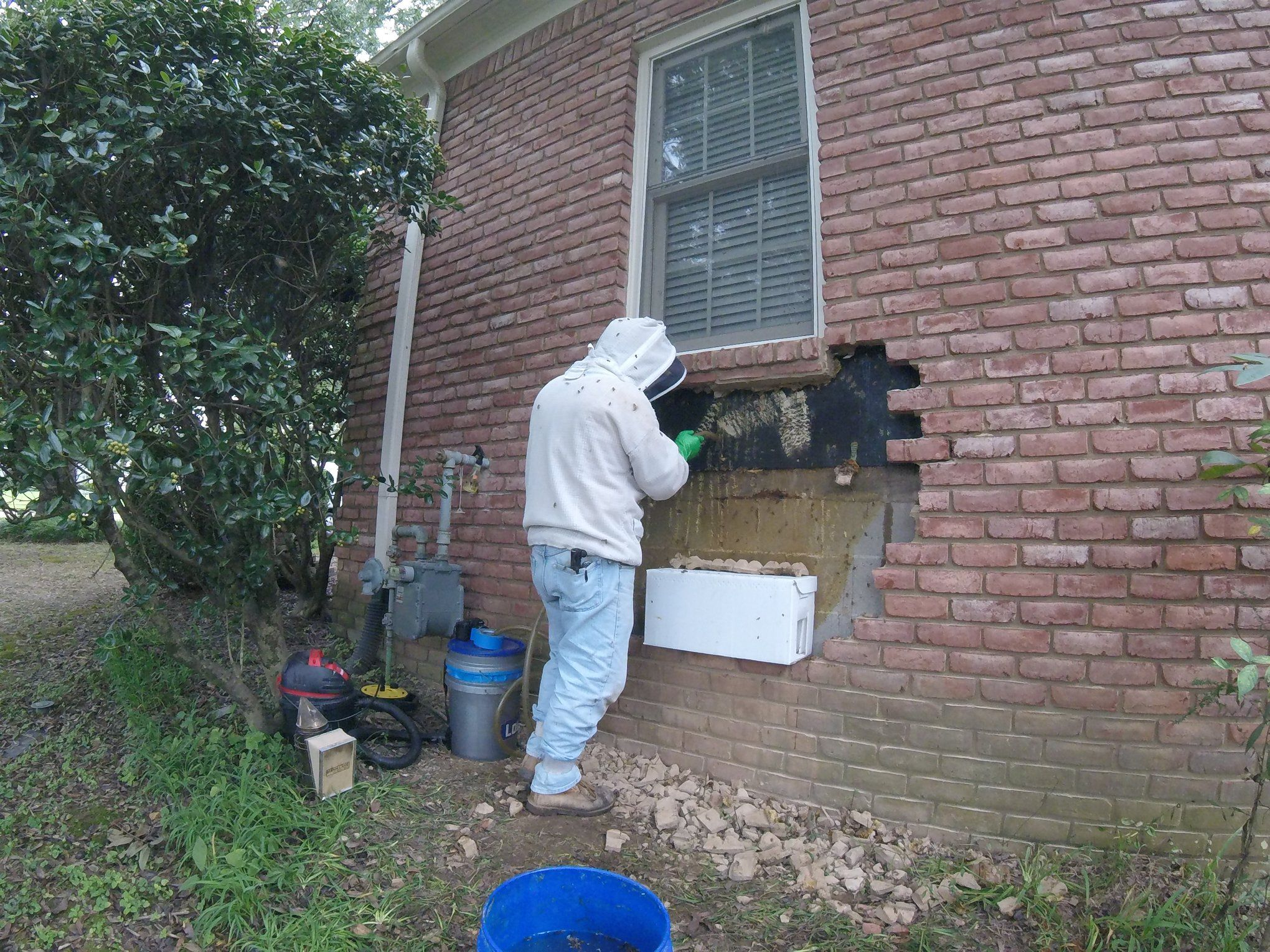 Bee keeper removing hive from wall