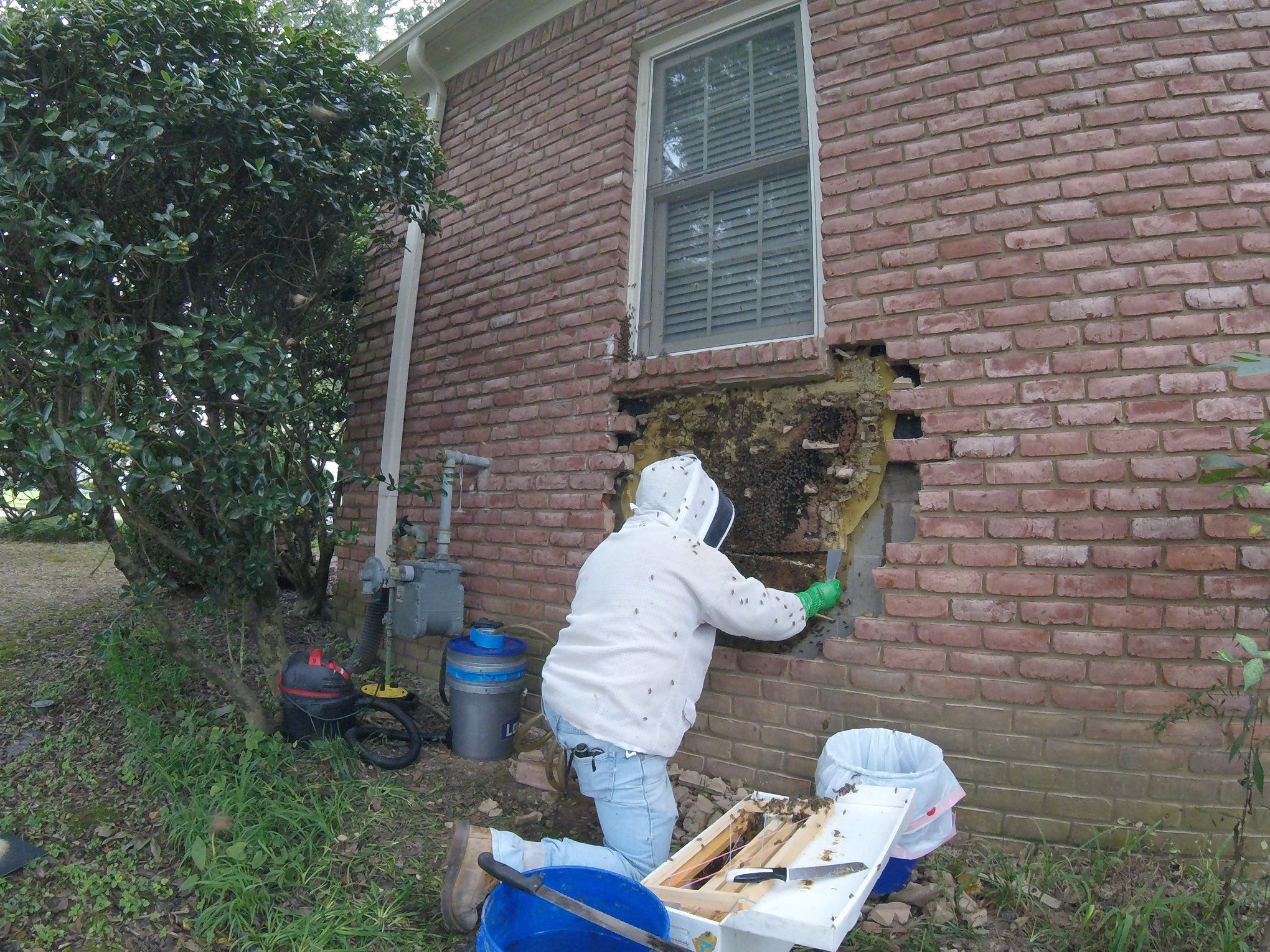 Bee keep removes bee hive from wall