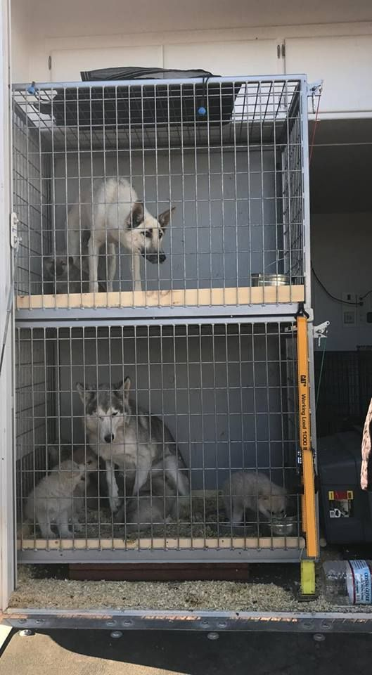 Wolfpups rescue