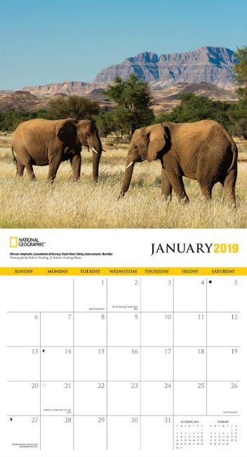 Elephant Wall Calendar