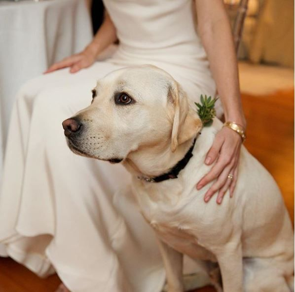 Sully H.W. Bush, former President George H.W. Bush's service dog, poses with the bride.