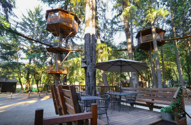 Out'n'About Treehouse Resort